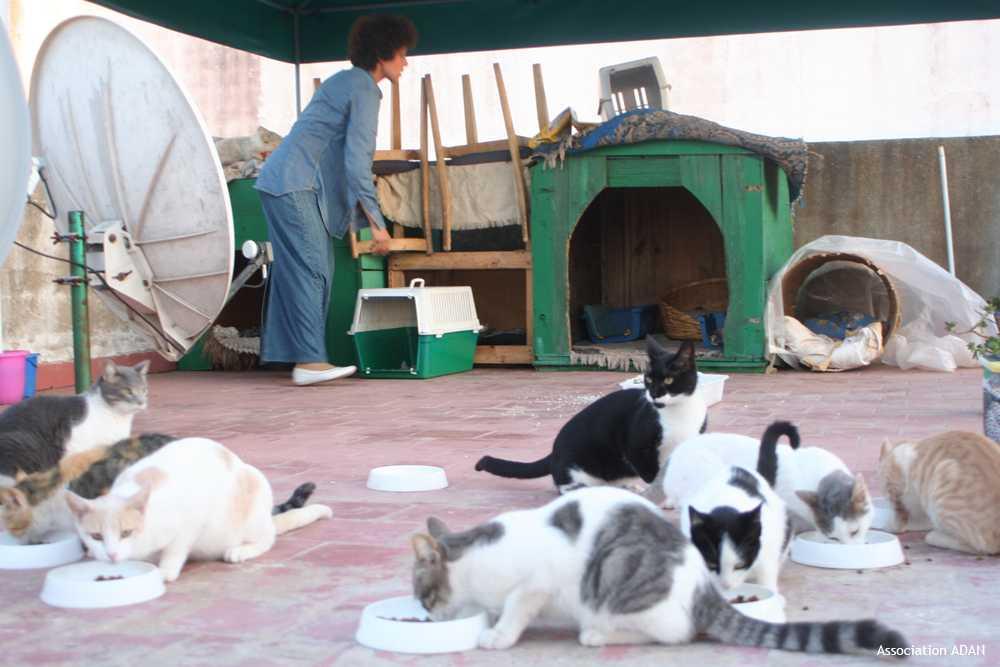 LA SPANA: pour le respect des animaux