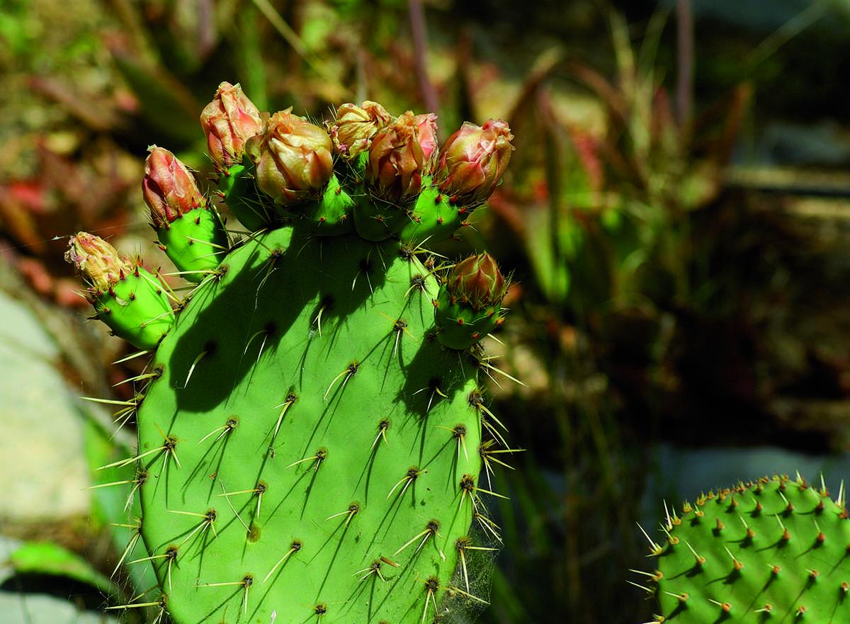 Cactus et plantes aromatiques, l'agriculture durable