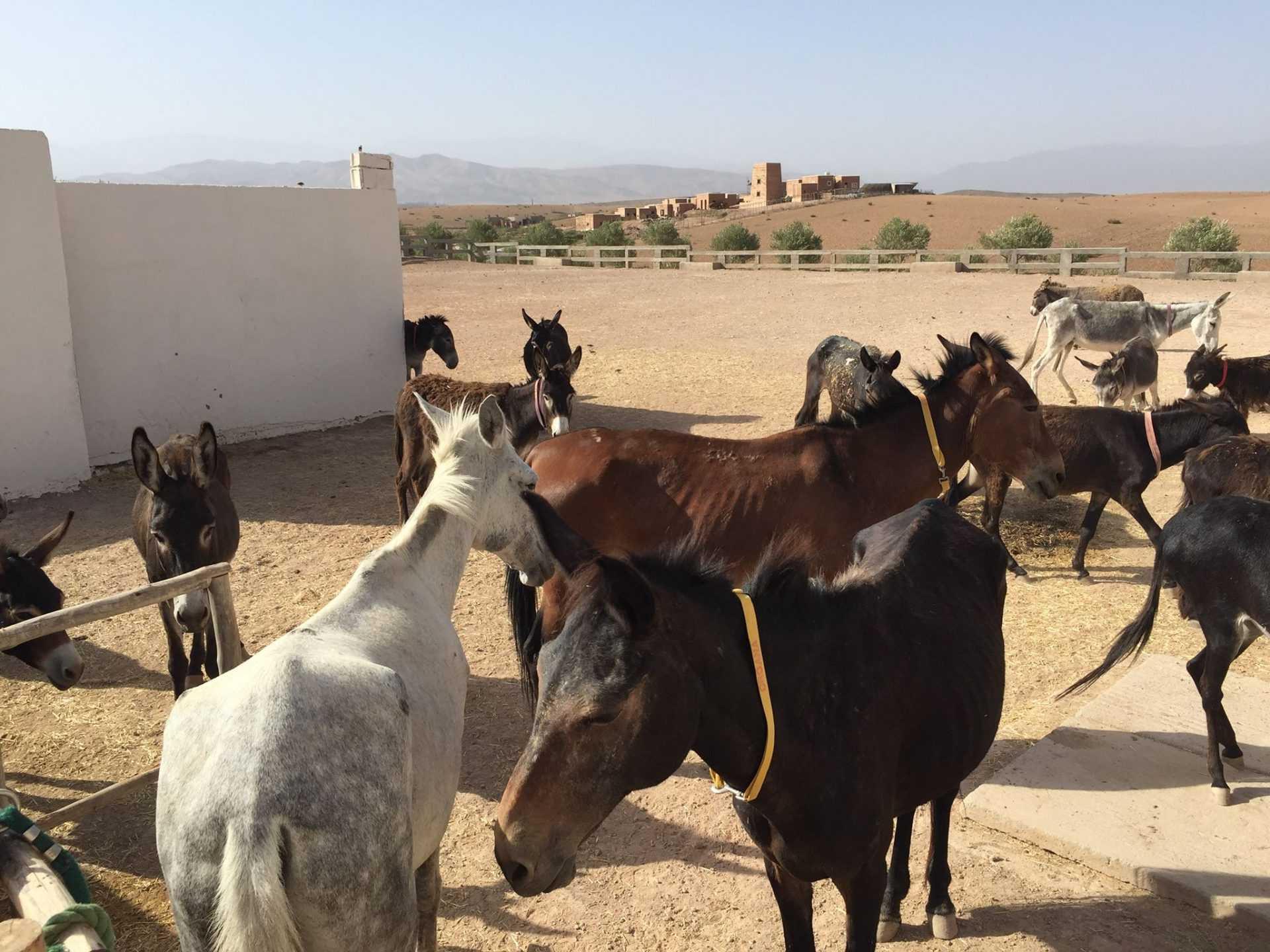 Une retraitée britannique crée un refuge pour les ânes abandonnés